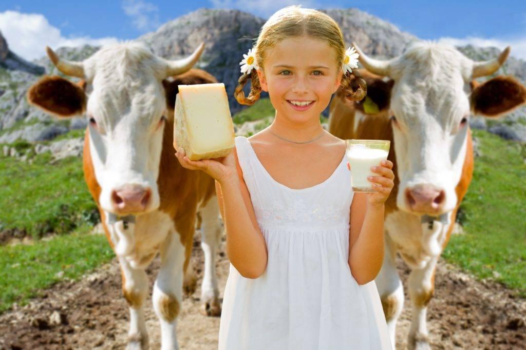 Выбор молочной коровы для своего хозяйства