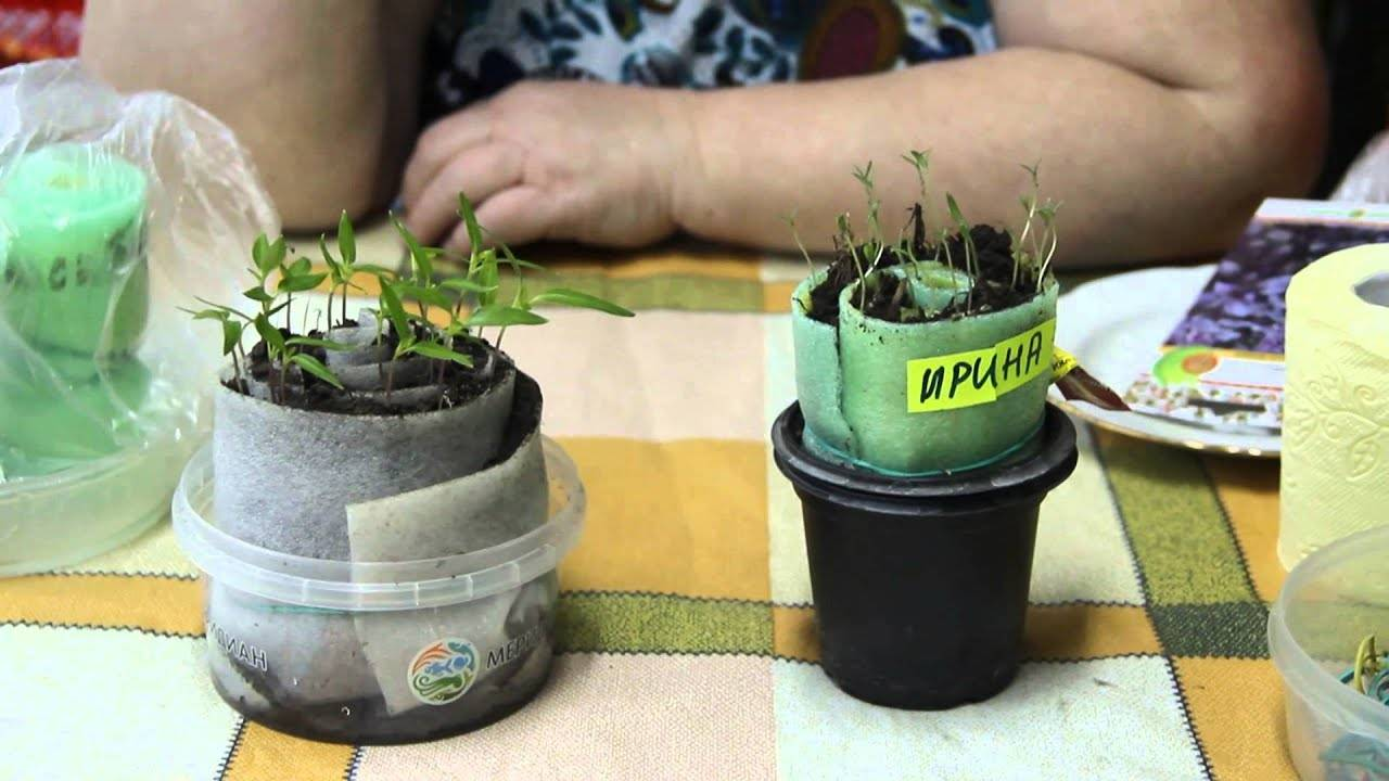 Выращивание зелени без земли и грунта
