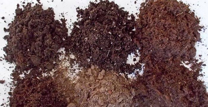 Выращивание примулы из семян: как сеять, пикировать, ухаживать