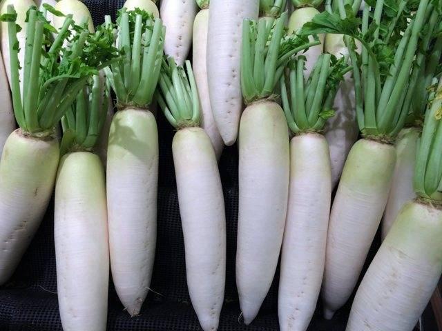 Белая редька – дайкон: полезные свойства и противопоказания овоща. практические рекомендации по употреблению