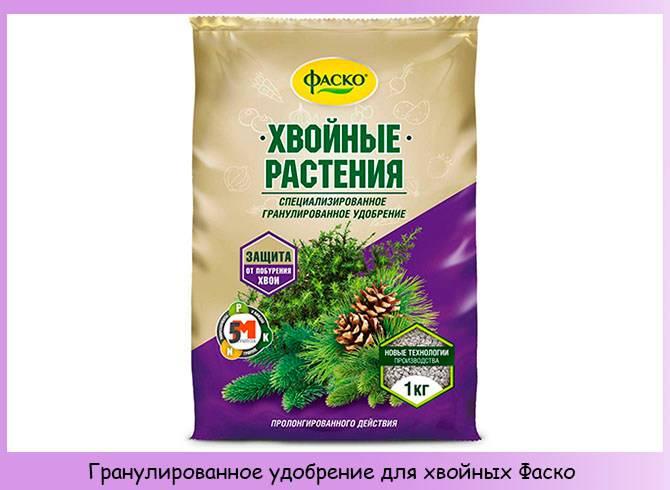 Удобрения для хвойных растений: домашние и магазинные, весенние и летние, жидкие и в гранулах — что выбрать?