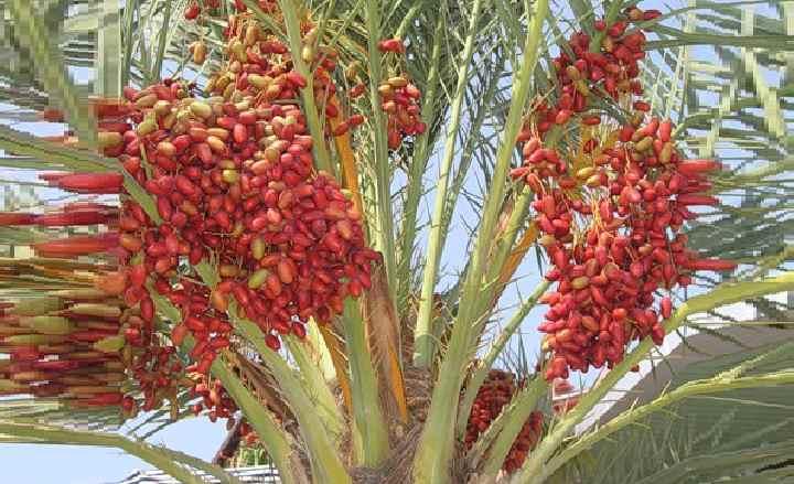 Как размножить пальму в домашних условиях: возможные и категорически недопустимые способы