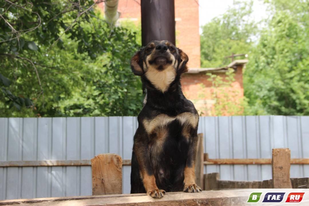Домик для собаки своими руками: четвероногому хозяину — комфортное жилье