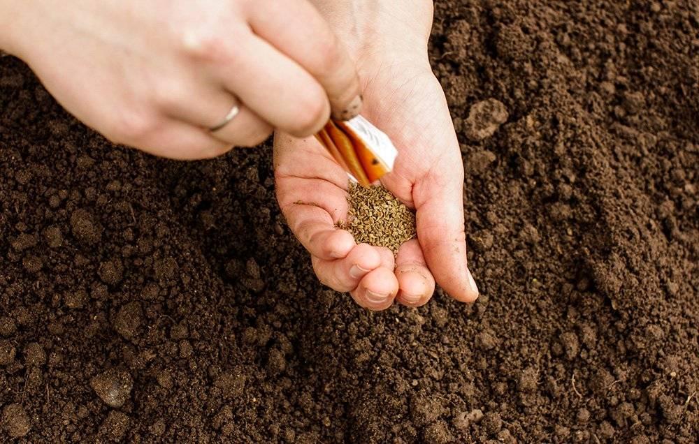 Как сажать морковь семенами в открытом грунте, чтобы не прореживать?