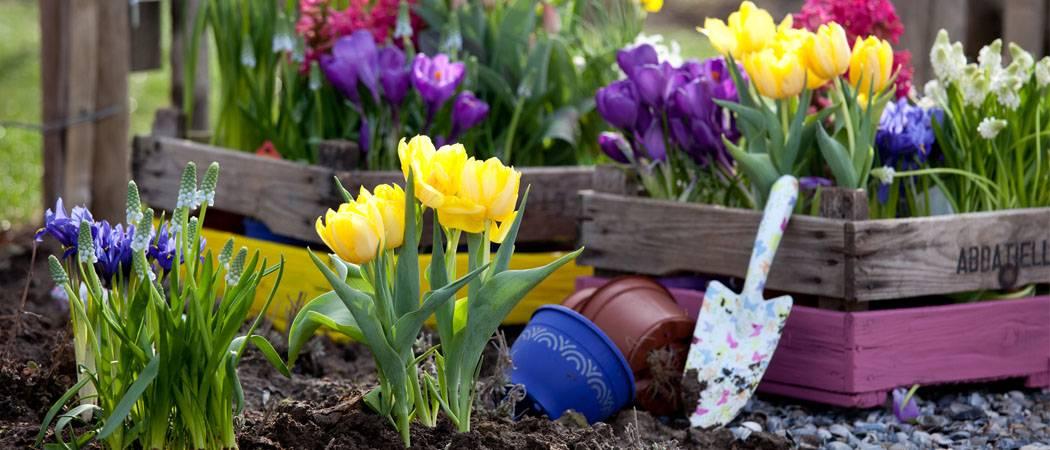 Луковичные ирисы: правильная посадка и уход за цветком