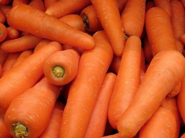 Подготовка семян моркови к посадке