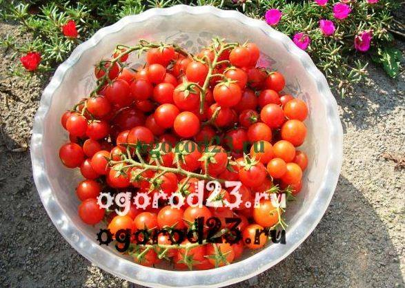 Польза и вред помидоров для здоровья человека
