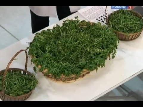 Салат руккола — польза и вред, применение для здоровья и красоты