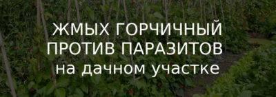 Горчичный жмых — опасное удобрение или нет. натуральное удобрение с защитными свойствами