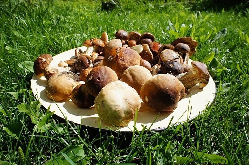 Сбор грибов: общие правила и советы начинающему грибнику