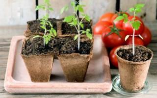 Подготовка семян к посеву и уход за рассадой: полезные советы новичкам