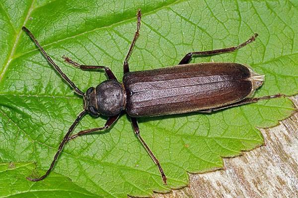 Три самых злостных насекомых-вредителя наносящих ущерб лесам россии