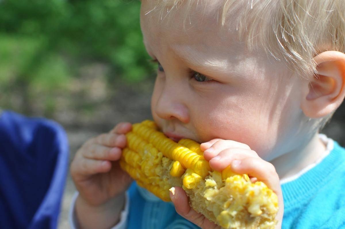 Топ 50 лучших сортов кукурузы с описанием и характеристиками