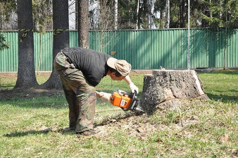 Как выкорчевать яблоню: лучшие способы быстрого удаления пня с участка