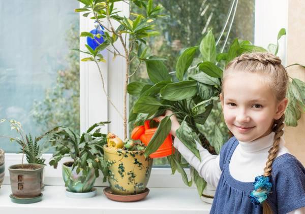 Выбор комнатных растений: советы начинающим цветоводам