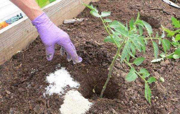 Медовая капля — сахарные томаты цвета янтаря: описание сорта, особенности выращивания