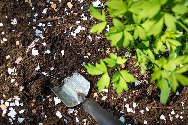 Как использовать яичную скорлупу в огороде