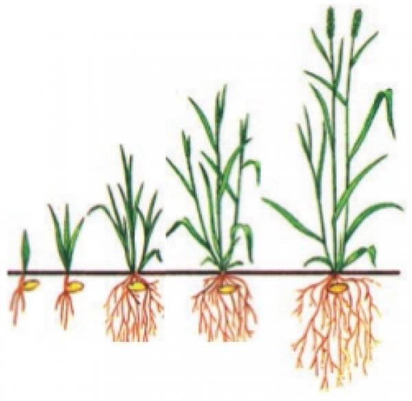 Вегетативный период у растений что это. вегетационный период