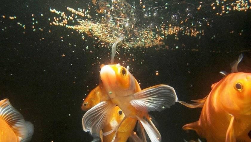 Живой корм для аквариумных рыб-виды хранение фото как кормить.