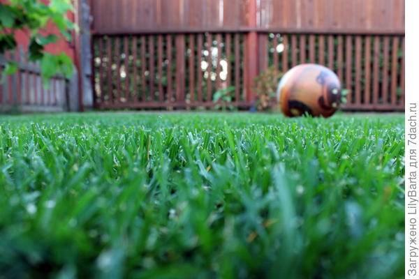 Травосмеси для газонов