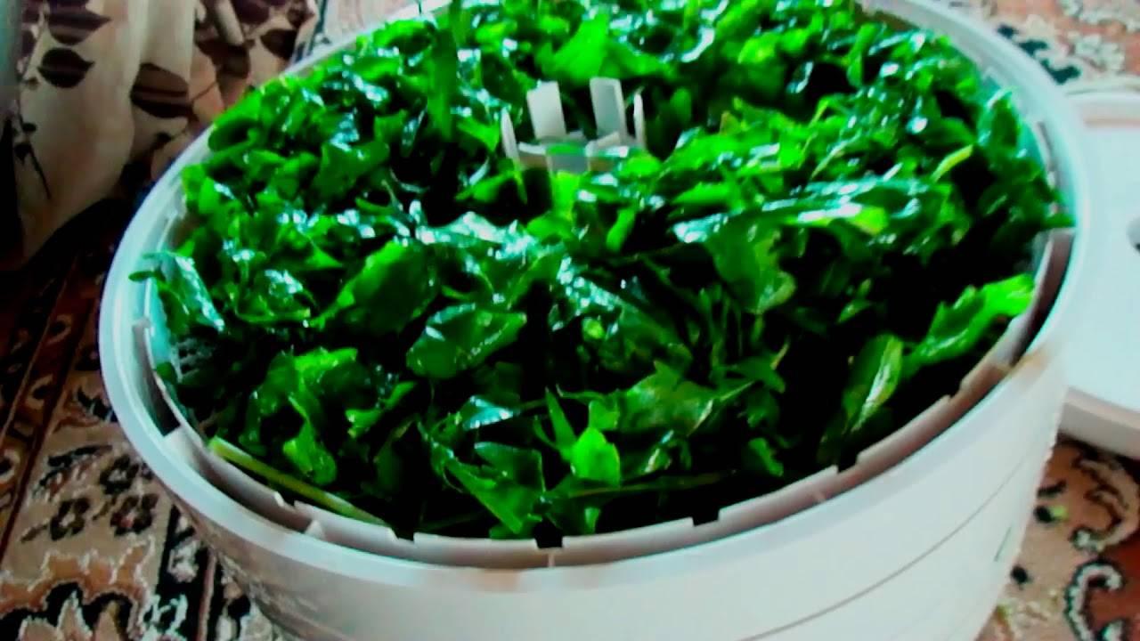 Руккола – королева европейских салатов: полезные свойства и рецепты