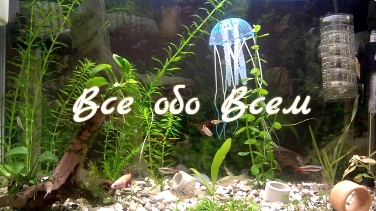 Бакопа: выращивание из семян, фото, посадка и уход в домашних условиях