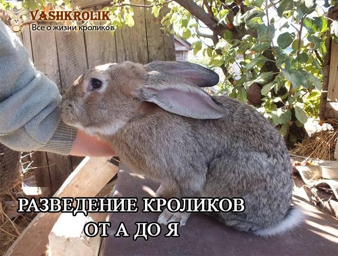 Разведение кроликов в яме: содержание и технология выращивания для начинающих