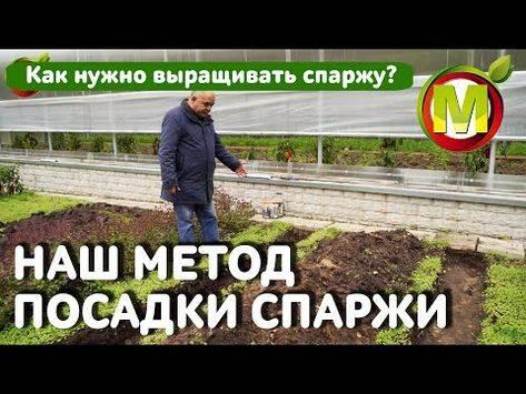 Что такое бергамот и можно ли его вырастить на даче?
