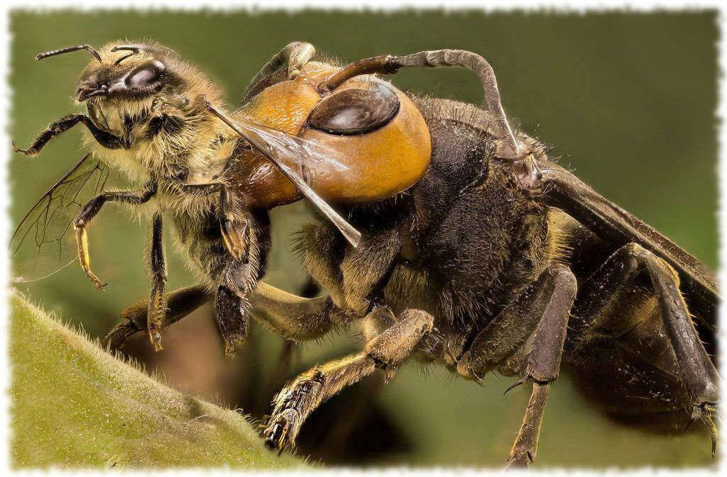 Признаки и лечение болезней пчел