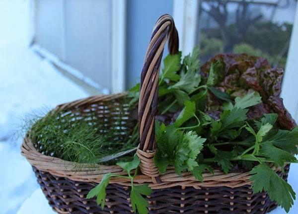 Как собрать три урожая в теплице за один сезон