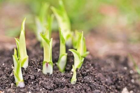 Можно ли пересаживать цветы летом в саду. весенняя пересадка многолетних садовых цветов – делаем правильно