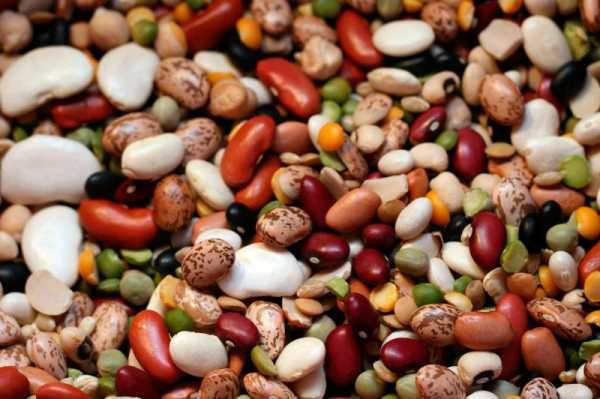 Фасоль: выращивание, уборка и хранение