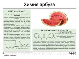 О пользе арбузных семечек для здоровья
