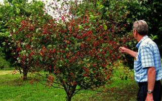 Как правильно ухаживать за яблоней весной после зимы: обработка, защита от болезней и вредителей