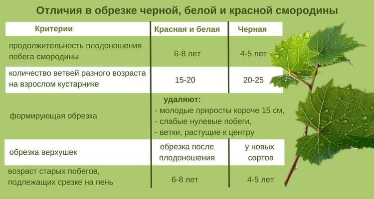 Основные этапы ухода за смородиной весной после зимы