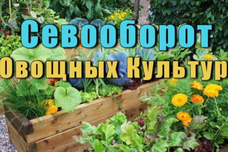 Выбираем лучшие сидераты для огорода