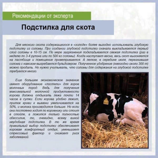 Содержание коров — способы, правила, особенности и актуальные рекомендации по содержанию крупного рогатого скота (100 фото)
