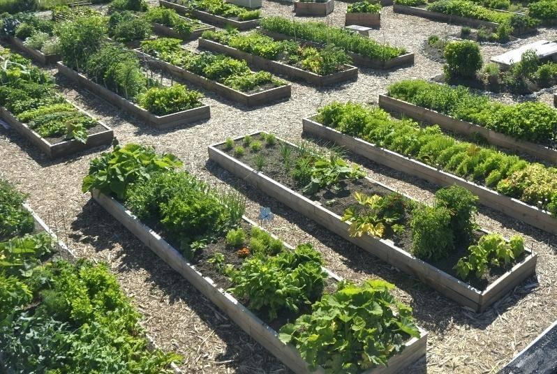 Какие документы нужны и каков порядок приватизации участка в садовом товариществе?