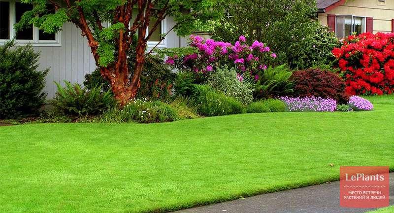Травосмесь для газона — какая лучше?