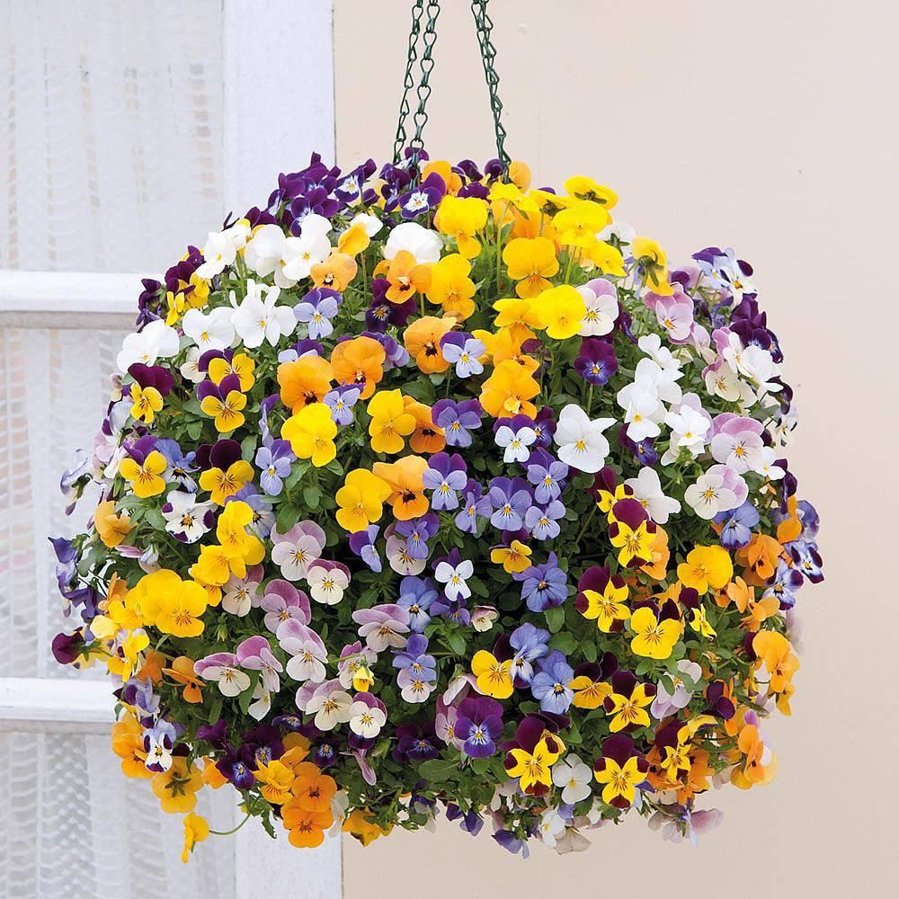 Какие свисающие ампельные цветы лучше выбрать для кашпо, как посадить и ухаживать