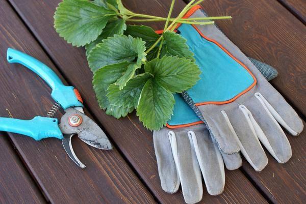 Когда лучше удобрять клубнику. залог прекрасного урожая — своевременная подкормка клубники весной! подкормка клубники осенью