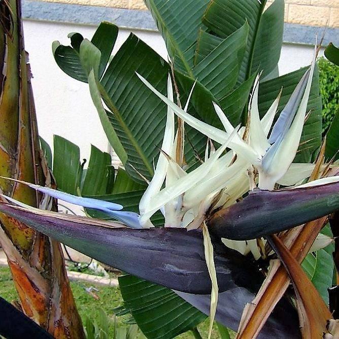 Пошаговая инструкция для размножения бегонии листом в домашних условиях. советы опытных садоводов