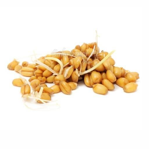 Почему сок из пророщенной пшеницы называют зеленым золотом?