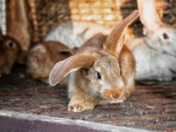 Шедовое содержание кроликов — размеры шеда, освещение, видео