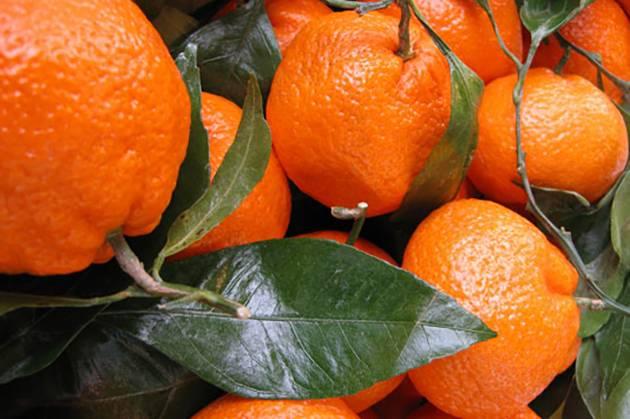 Мандарин: описание, уход и выращивание дома