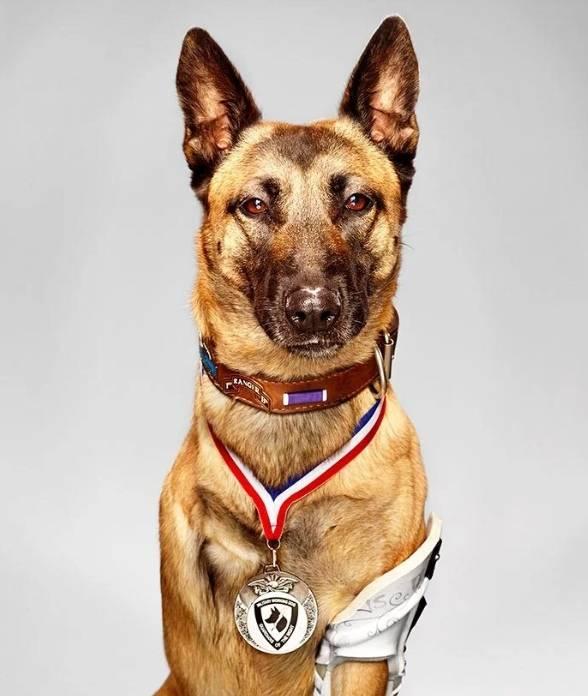 Принцип монтажа самодельного вольера для собаки