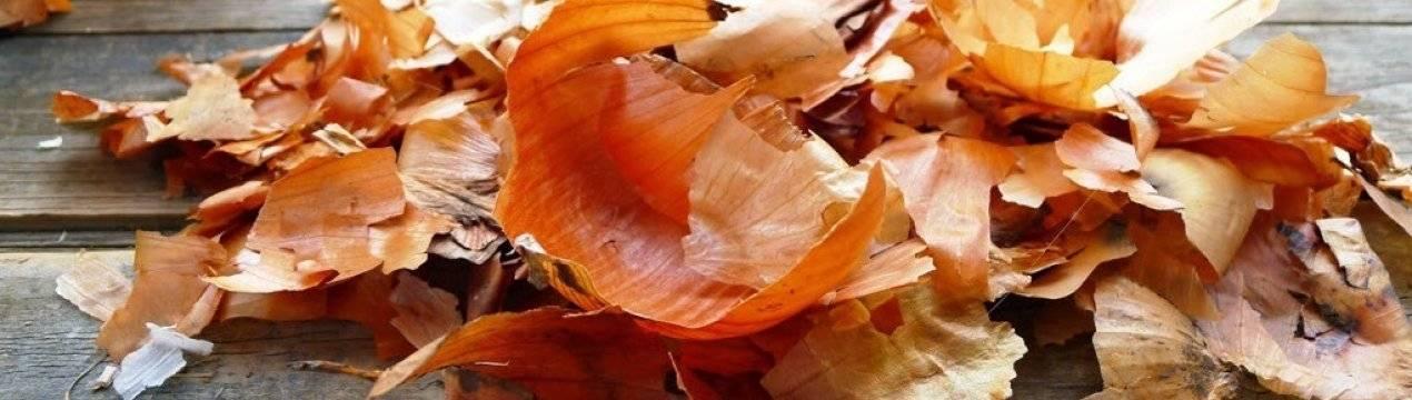 Луковая шелуха: полезные свойства, противопоказания, польза и вред