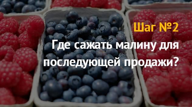Бизнес-идея: выращивание малины на продажу
