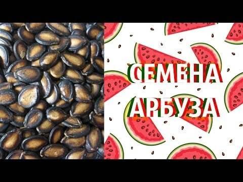 Арбузные семечки: польза и вред для здоровья, рецепты применения