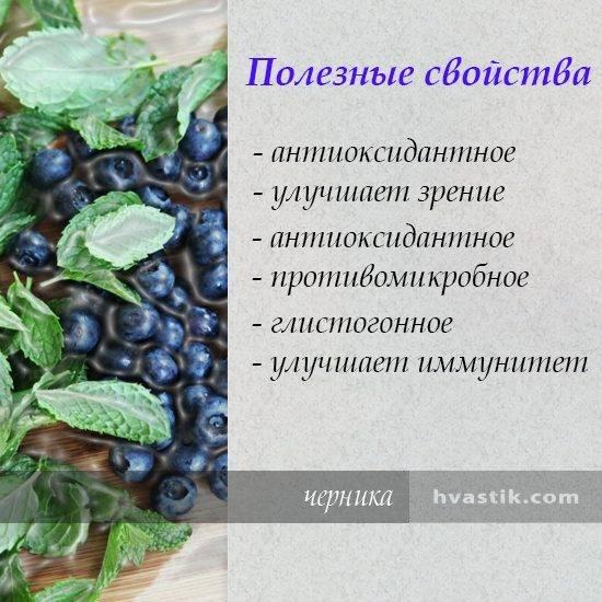 Полезные свойства черники, советы и вкусные рецепты